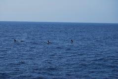 Lo stretto della Gibilterra Fotografia Stock Libera da Diritti