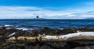 Lo stretto di Magellan, Cile immagine stock libera da diritti