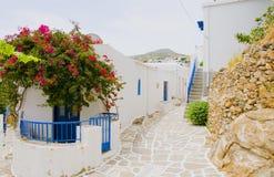 Lo stucco bianco di Milo dell'isola greca di scena della via ha dipinto le vie blu classiche Grecia della buganvillea della porta Immagine Stock Libera da Diritti