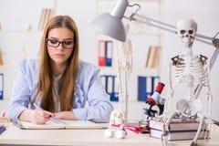 Lo studente che si siede nell'aula e che studia scheletro Fotografie Stock Libere da Diritti