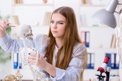 Lo studente che si siede nell'aula e che studia scheletro Fotografia Stock