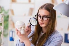 Lo studente che si siede nell'aula e che studia scheletro Fotografie Stock