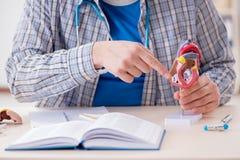 Lo studente di medicina che studia cuore in aula durante la conferenza Fotografia Stock