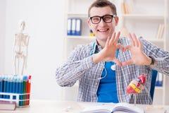 Lo studente di medicina che studia cuore in aula durante la conferenza Fotografia Stock Libera da Diritti