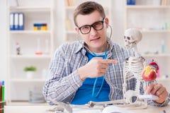 Lo studente di medicina che studia scheletro in aula durante la conferenza Fotografia Stock Libera da Diritti