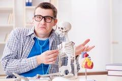 Lo studente di medicina che studia scheletro in aula durante la conferenza Fotografie Stock