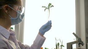 Lo studio biologico, l'assistente di laboratorio nella maschera e gli occhiali di protezione con la siringa inietta la preparazio stock footage