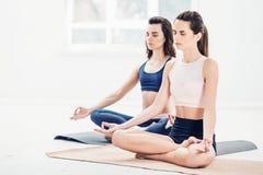 Lo studio ha sparato delle giovani donne che fanno gli esercizi di yoga su fondo bianco Fotografia Stock Libera da Diritti