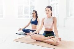 Lo studio ha sparato delle giovani donne che fanno gli esercizi di yoga su fondo bianco Immagini Stock