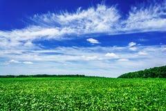 Lo stupore delle piante della soia in agricoltori coltivati sistema Fotografia Stock Libera da Diritti