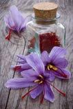 Lo zafferano fiorisce (crocus sativus) Fotografie Stock Libere da Diritti