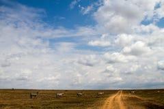 Lo zelo o abbaglia delle zebre dentro in Serengeti, Tanzania Fotografie Stock