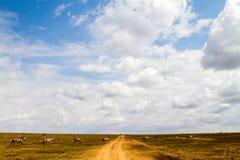 Lo zelo o abbaglia delle zebre dentro in Serengeti, Tanzania Fotografia Stock Libera da Diritti