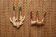 Lo zenzero e la galanga si pianta sulla carta da parati marrone che mostra la struttura del placemat del giacinto d'acqua secco t immagine stock