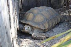 Lo zoo centrale di FL in Sanford Fl Fotografia Stock Libera da Diritti