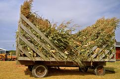 Load of corn shocks. A load of corn shocks on a rack are ready to be used as feed or chopped as silage Stock Image