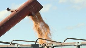 Load corn into the truck closeup stock footage