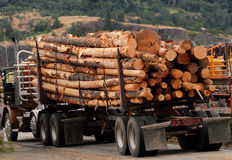 Load of cut logs. A truck load of cut logs from the forest Stock Image