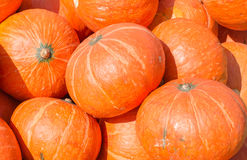 Load of Pumpkins Royalty Free Stock Photos
