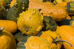 Load of Pumpkins and Squashes Stock Photography