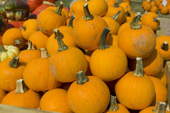Load of Pumpkins and Squashes Royalty Free Stock Photos