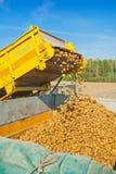 Loadding der Kartoffel auf Ernte Stockfotografie