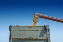 Loadding kukurudze kukurydzy kukurudza w tipper Obrazy Stock