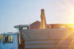 Loadding kukurydzy kukurudze po zbierać Zdjęcia Royalty Free