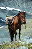 Loaded horse. Horse in the mountainous region Stock Photography