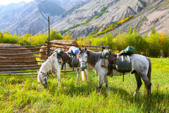Loaded horses Royalty Free Stock Photos