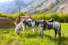 Loaded horses Royalty Free Stock Photos