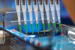 loading amplified DNA samples to agarose gel with multichannel p stock image