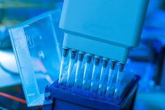 loading amplified DNA samples to agarose gel with multichannel p royalty free stock photo