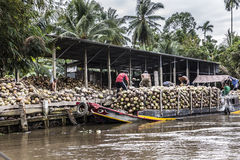 Loading coconuts Stock Image