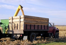 Loading corn on truck Stock Photo
