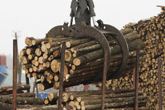 Loading cut wooden logs Royalty Free Stock Images