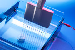 Loading DNA Samples onto an Agarose Gel Electrophoresis Royalty Free Stock Photos