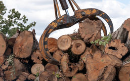 Loading of felled timber in a truck with crane Royalty Free Stock Image