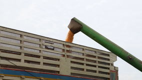 Loading of grain of corn in tractor trailer stock video