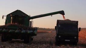 Loading harvest. Loading grain harvest in  truck stock video