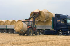 Loading hay Royalty Free Stock Image