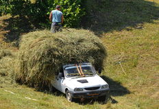 Loading hay in a car stock photo