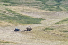 Loading mown hay on a hillside stock images
