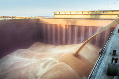Free Loading Of Wheat In A Hold Stock Photo - 95067780