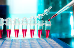 Loading samples for DNA amplification Stock Image