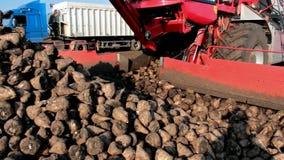 Loading sugar beet truck stock video