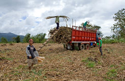 Loading sugar cane Royalty Free Stock Images