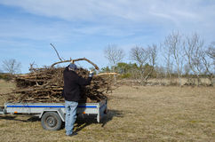 Loading a trailer. With twigs from a garden Stock Images