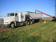 Loading wheat into trucks. During harvest in Saskatchewan Royalty Free Stock Photos