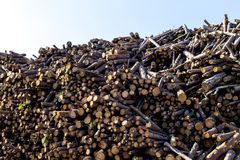 Loads of timber log stacks Royalty Free Stock Photo